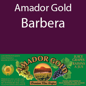 Amador Gold Barbera