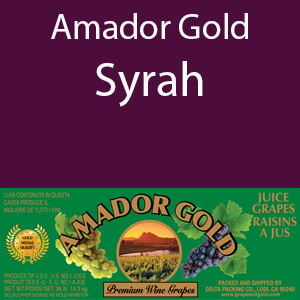 Amador Gold Syrah