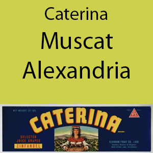 Caterina Muscat Alexandria Clement Hills AVA Base of Sierra Foothills